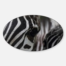 Zebra Eye Sticker (Oval)