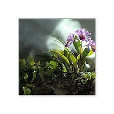 """Orchids No. 1 Square Sticker 3"""" x 3"""""""