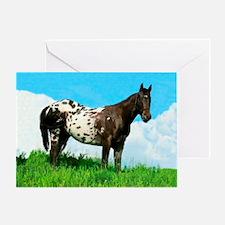 Blanket Appaloosa Horse Card Greeting Cards