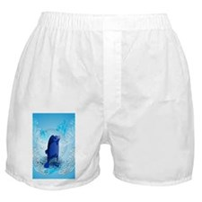 Cute walrus with decorative splash elements Boxer