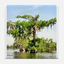Beautiful swamp tree Tile Coaster