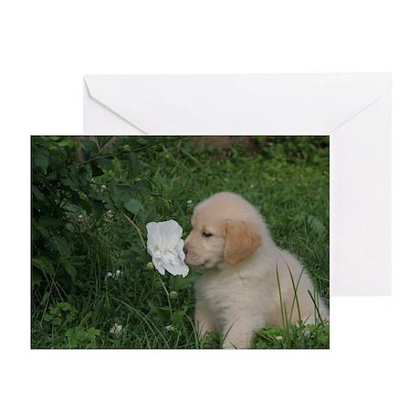 Golden Retriever Puppy Greeting Cards (Pk of 20)