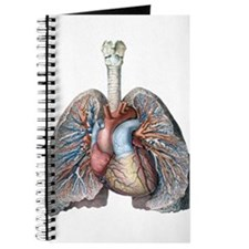 Human Anatomy Heart and Lungs Journal