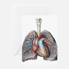 Human Anatomy Heart and Lungs Greeting Cards