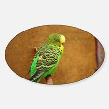 Budgie Decal