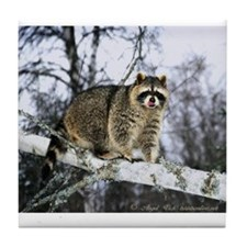 Winter Raccoon Tile Coaster