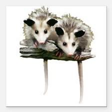 """Baby Possums on a Branch Square Car Magnet 3"""" x 3"""""""