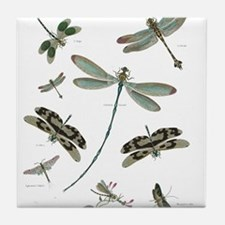 entomology Tile Coaster