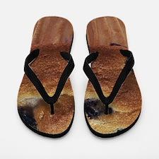 Blueberry Muffin Flip Flops