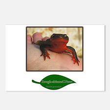 Rough Skinned Newt Salamander Postcards (Package o