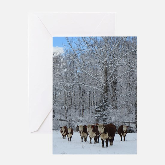 Cows In Snow Card Greeting Cards