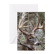 Hideaway Buck Greeting Cards