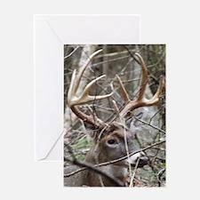 Hideaway Buck Greeting Cards