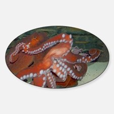 Cute Giant pacific octopus Decal