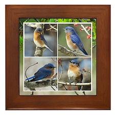 Unique Eastern bluebird Framed Tile