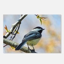Spring Chickadee Postcards (Package of 8)