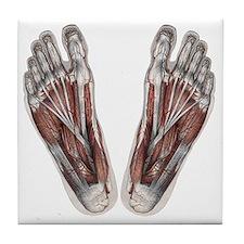 Vintage Human Anatomy Feet Tile Coaster