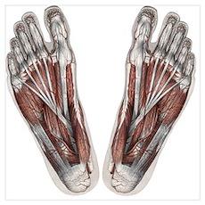 Vintage Human Anatomy Feet Poster