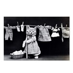 Laundry Kitten Postcards (package Of 8)