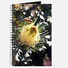 Bee on dryandra flower in garden Journal