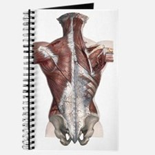 Vintage Human Anatomy Journal