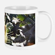 Bee on dryandra flower in garden Mugs