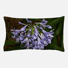 Blue agapanthus flower in bloom in gar Pillow Case