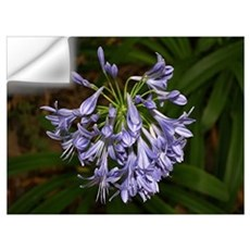 Blue agapanthus flower in bloom in garden Wall Decal