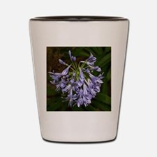 Blue agapanthus flower in bloom in gard Shot Glass