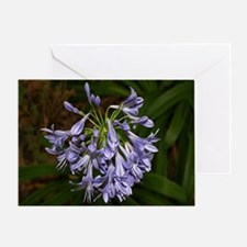 Blue agapanthus flower in bloom in g Greeting Card