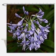 Blue purple agapanthus flower in bl Shower Curtain