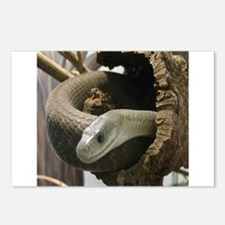 Black Mamba Snake Postcards (Package of 8)