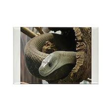 Black Mamba Snake Magnets