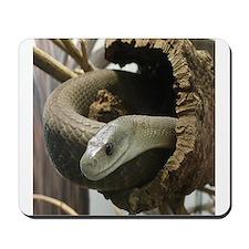 Black Mamba Snake Mousepad