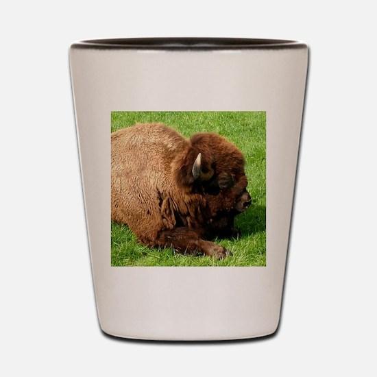 Northwest Buffalo Shot Glass