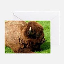Northwest Buffalo Greeting Card