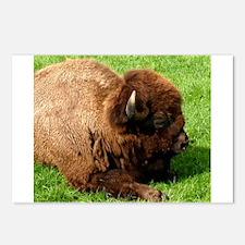 Northwest Buffalo Postcards (Package of 8)
