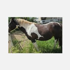 A Dark Brown And White Paint Horse Magnets