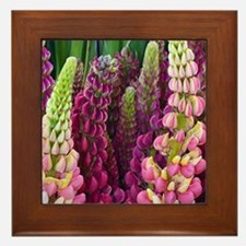 Pink and purple lupin flowers Framed Tile