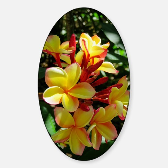 Hawaiian Plumeria Sticker (Oval)