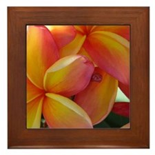 Hawaiian Plumeria Framed Tile