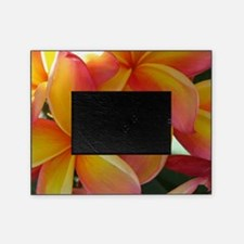 Hawaiian Plumeria Picture Frame