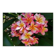 Hawaiian Plumeria Postcards (Package of 8)