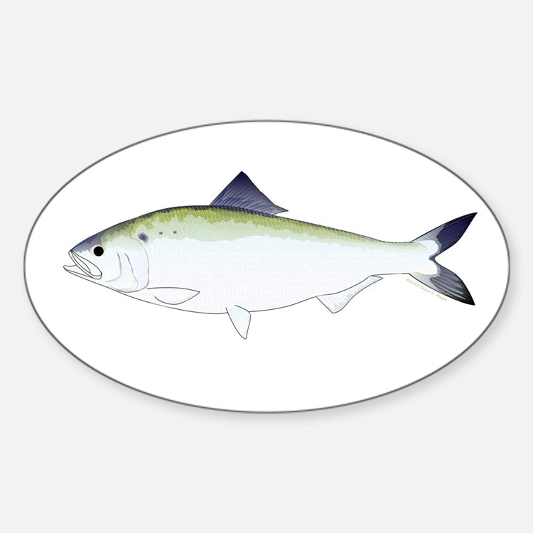 American Shad Decal