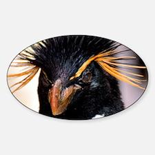 oRange rockhopper penguin Decal