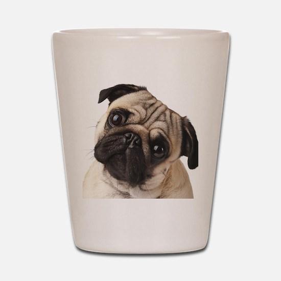 Curious Pug Shot Glass