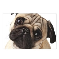 Curious Pug Postcards (Package of 8)