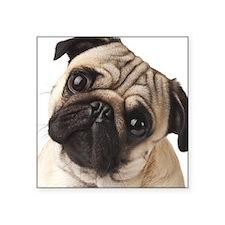"""Curious Pug Square Sticker 3"""" x 3"""""""