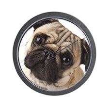Curious Pug Wall Clock
