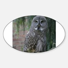 Owl_2015_0203 Decal